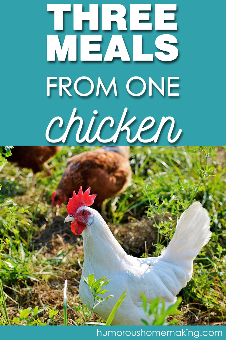 How to Get Three Meals from One Chicken - Humorous Homemaking