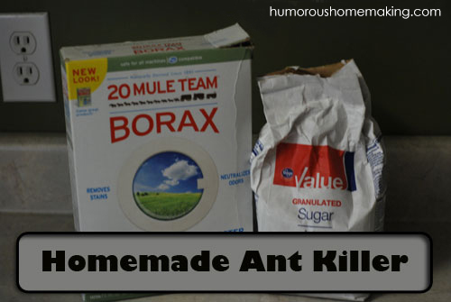 An easy Homemade Natural Ant Killer that will help rid you of those pesky little creatures that find their way into your kitchen every year.